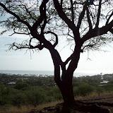 Hawaii Day 2 - 100_6561.JPG