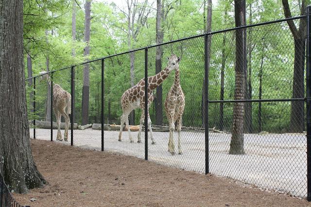 Zoo Snooze 2015 - IMG_7247.JPG