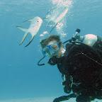 Lots of palometa fish @ Buddy reef