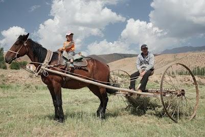 Heuernte per Pferd