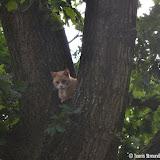 Kat door brandweer uit boom gered - Foto's Teunis Streunding
