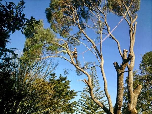 BranchingOutHighTree.jpg
