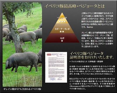 ccイベリコ豚548×439.jpg