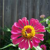 Gardening 2011 - 100_9981.JPG