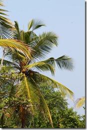 Ланка (171)