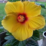 Gardening 2010 - 101_1007.JPG
