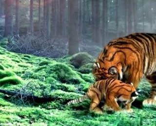 7 manusia harimau new generation akan tayang di mnctv tanggal 7 april