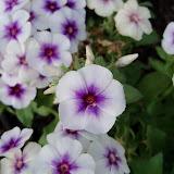 Gardening 2011 - 100_7114.JPG