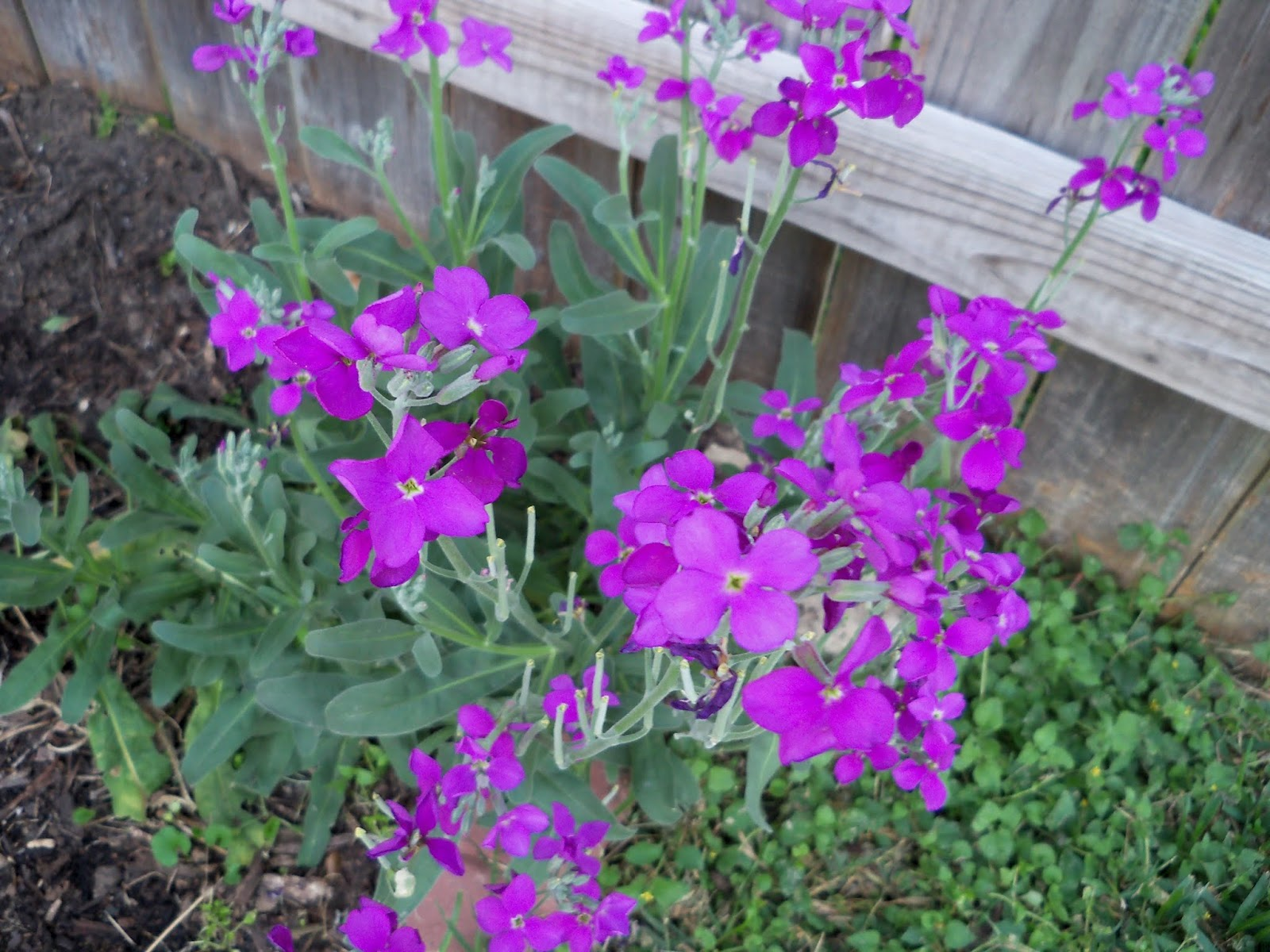 Gardening 2013 - 115_5438.JPG