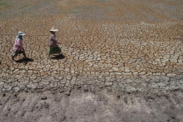 The 2015 drought in Bang Pla Ma district, in Thailand's Suphanburi province, is forcing impoverished Thai farmers deeper into debt and heaping fresh pain on an already weak economy. Photo: AFP
