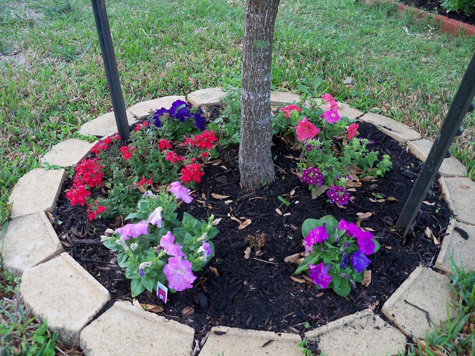 Gardening 2011 - 100_6734.JPG