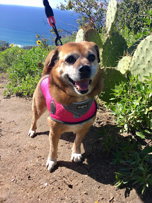 dog, trail, beach, ocean, cactus, plants