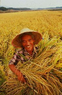 Harvest farmer