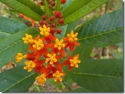 Leggo flowers