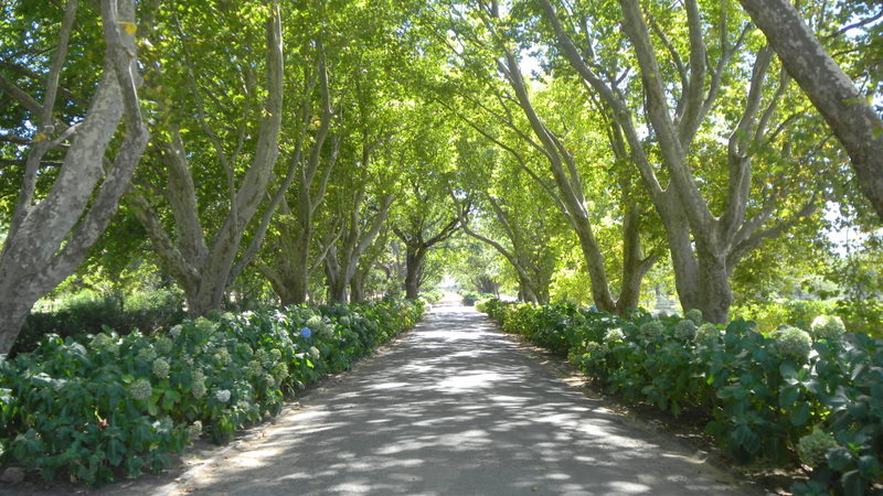 Pretty Road in one of the Vinyards