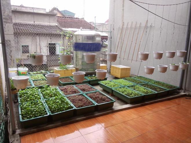 Khu vườn gọn gàng với rèm mồng tơi xanh mướt - 55c03337b86b4