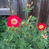 Gardening 2011 - 100_8851.JPG