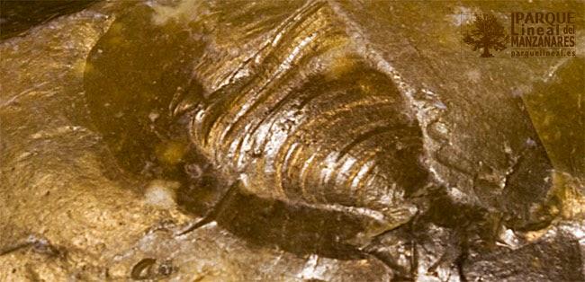 Detalle de la fractura cónica y de las ondas de percusión en una lasca de sílex.
