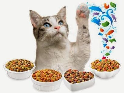 состав сухих кормов для кошек