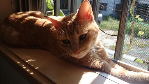 [写真]窓の桟に挟まってひなたぼっこ。ちょっとアンニュイな感じ