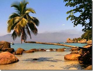 tradicional-coqueiro-deitado-em-aventureiro
