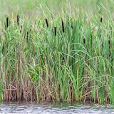 Водоемы и болота