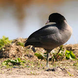 Vogels en dieren - IMG_6018.JPG