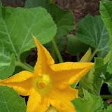 Gardening 2011 - 100_7549.JPG