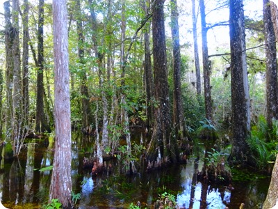 Big Cypress National Preserve