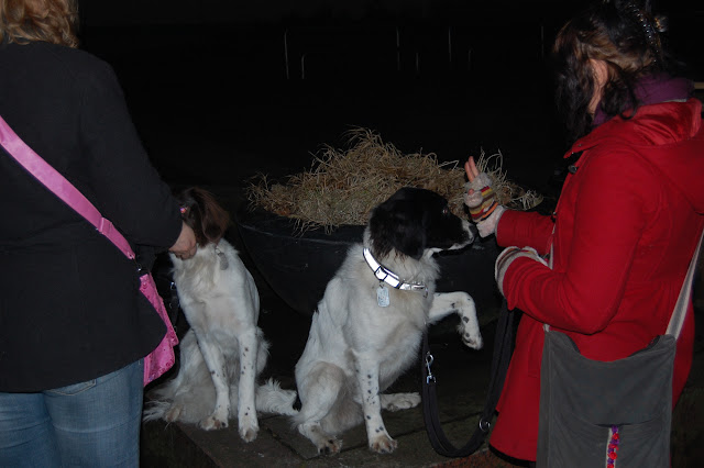 Jonge Hond centrum Emmen - 2012-04-01%2B028.JPG