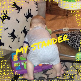 Photo of My Stander Wolfelicious