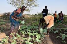 Lidé se učí pěstovat zeleninu na komunitních zahrádkách. (Foto: Tereza Hronová, ČvT)