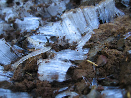 Ice crystals on the trail from the night before. Suddenly feeling like summer is over.