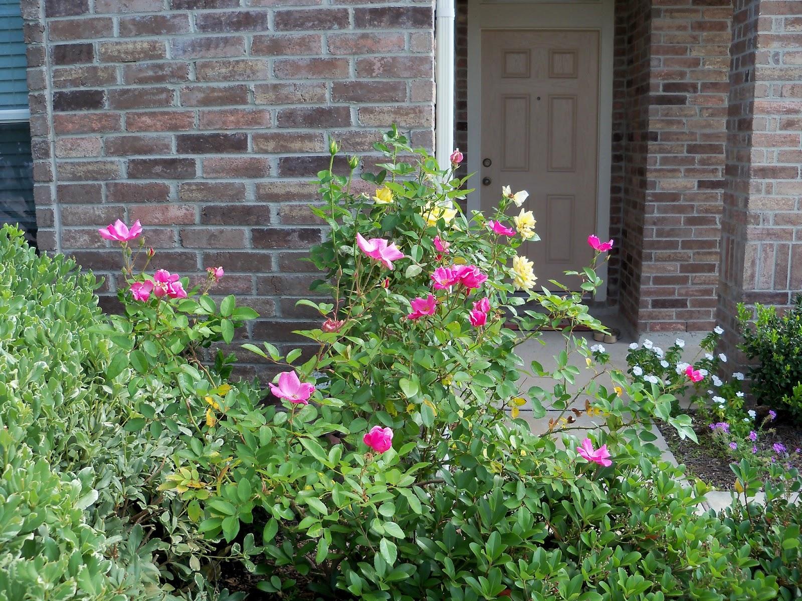 Gardening 2012 - 115_1705.JPG