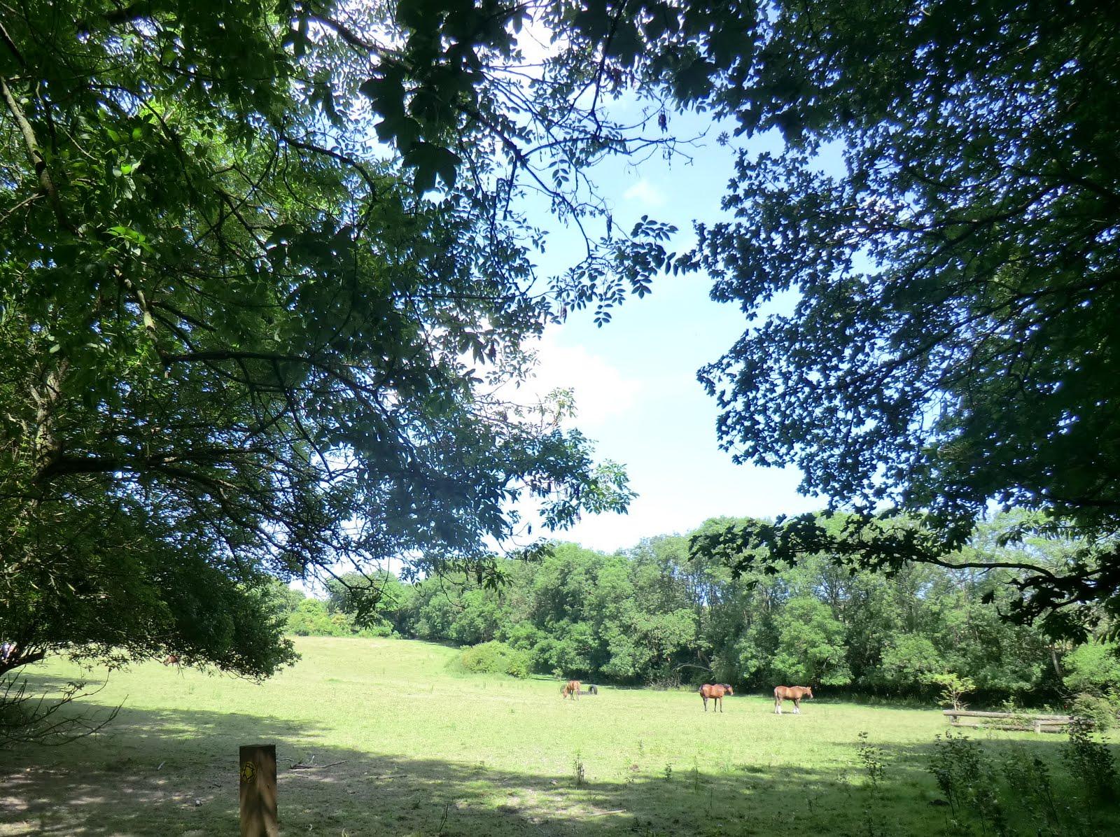 CIMG2359 Horses in field, Cobham Manor