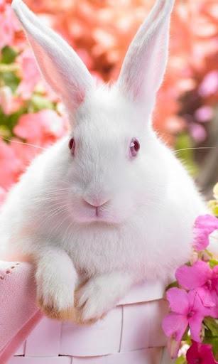 Lwp イースターのウサギ