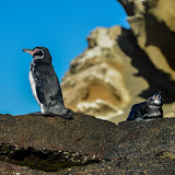 galapagos - Galapagos_FB-137.jpg