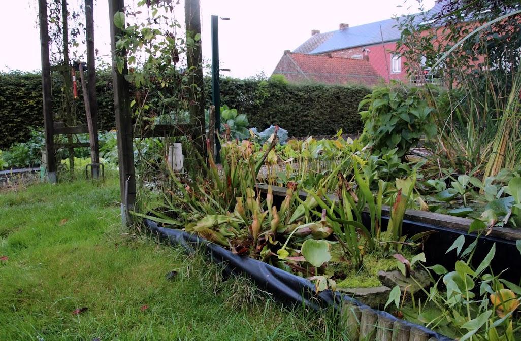 """Projet de """"tourbière"""" pour plantes carnivores IMG_8465"""