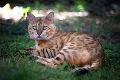 Indian Wild Animals ! भारत मे पाए जाने वाले 50 जंगली जानवर | 50 Wild Animals of India
