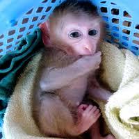 Manfaat Rekayasa Genetika dalam Penyembuhan Bekas Luka, rekayasa, rekayasa genetika, cloning, dna, gen, bacteri