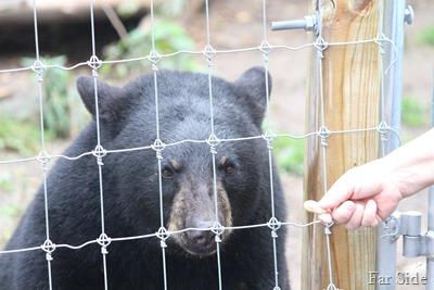 Bear in jail eating peanuts