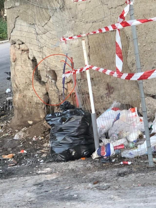 Caracciolo (FI): Utilizzare questi giorni di stop delle lezioni per una seria disinfestazione di scuole e strade!