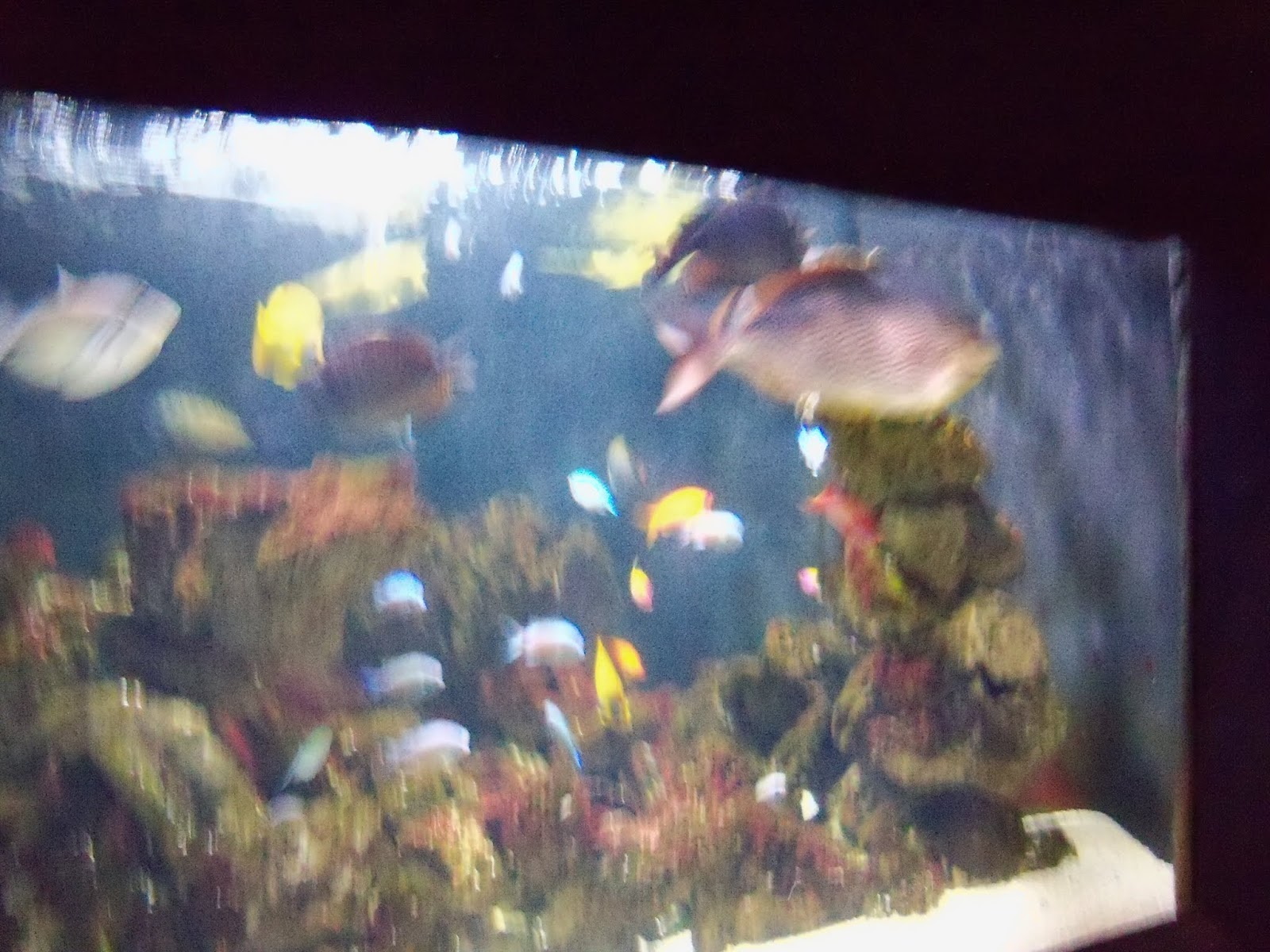 Houston Zoo - 116_8463.JPG