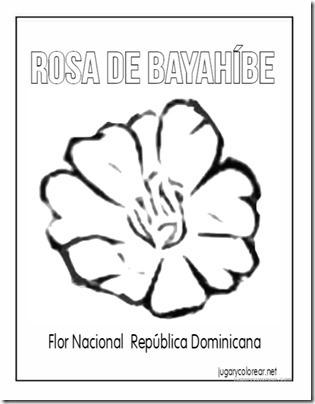 dominicana rosa de Bayahíbe