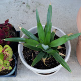 Gardening 2010, Part Three - 101_4919.JPG