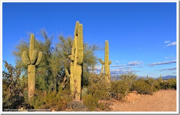 151229_Tucson_GregStarr_0093