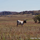 11-09-13 Wichita Mountains Wildlife Refuge - IMGP0401.JPG