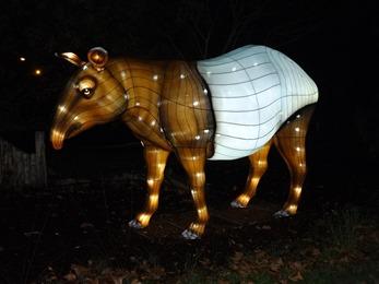 2018.12.03-098 tapir