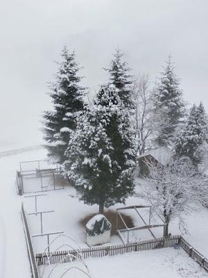 Am Sonntag gab es in den Südtiroler Dolomiten auf ca 1.500m Seehöhe ca 5cm Neuschnee. #wetter  #südtirol  #neuschnee