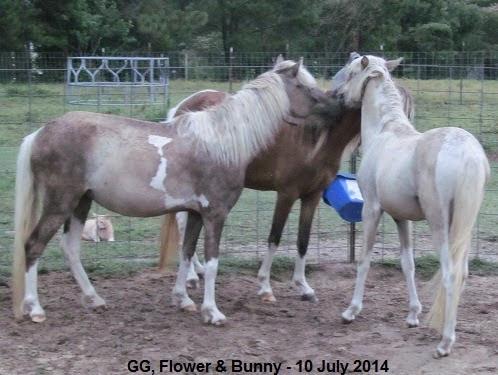 GG, Flower & Bunny